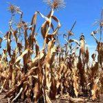La sequía no da tregua y cada vez se vende menos gasoil