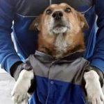 """""""El perrito Infinia"""" revoluciona las redes sociales"""